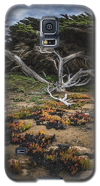 Coastal Guardian Galaxy S5 Case
