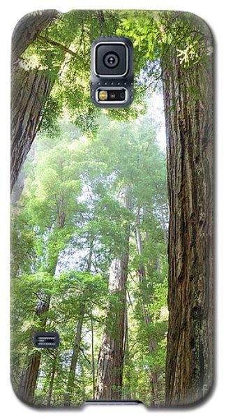 Coastal Redwoods  Galaxy S5 Case