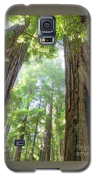 Coastal Redwoods  Galaxy S5 Case