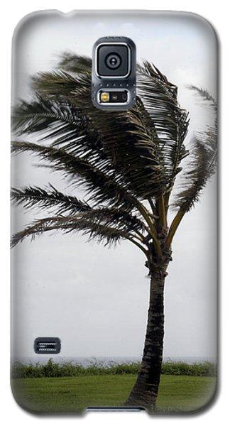Coastal Winds Galaxy S5 Case