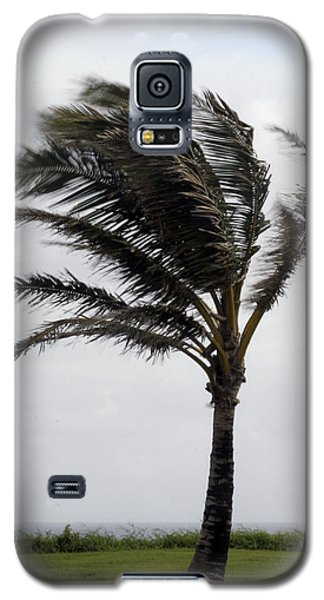 Coastal Winds Galaxy S5 Case