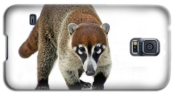 Coatimundi Galaxy S5 Case