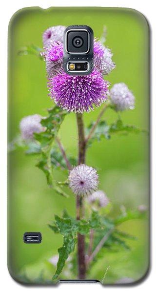 Cobweb Thistle Galaxy S5 Case