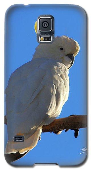 Cockatoo Galaxy S5 Case by Linda Hollis