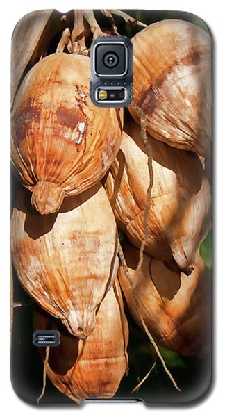 Coconut 3 Galaxy S5 Case
