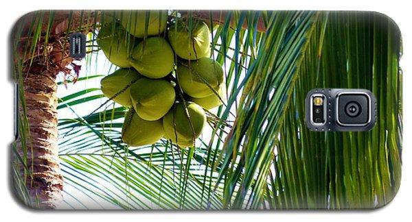 Coconuts Galaxy S5 Case