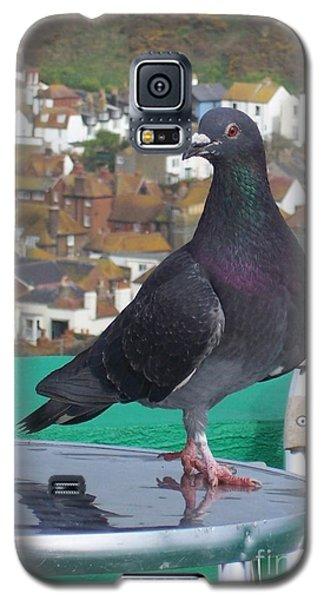 Galaxy S5 Case featuring the photograph Coffee Shop Pigeon by Jolanta Anna Karolska