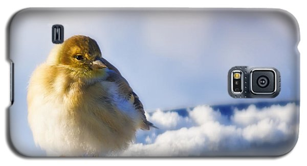 Cold American Goldfinch Galaxy S5 Case