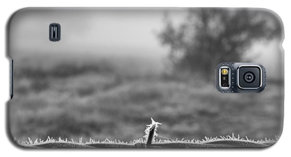 Cold Frosty Morning Galaxy S5 Case by Monte Stevens