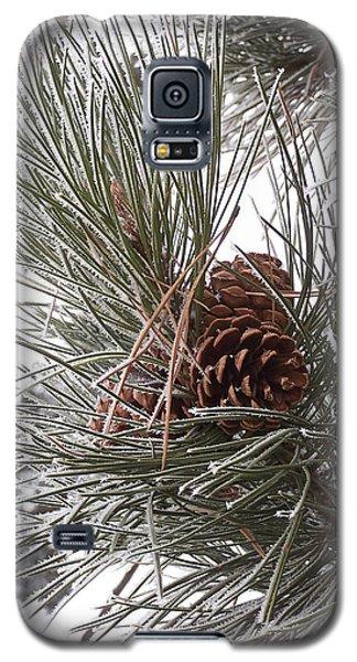 Cold Pine Galaxy S5 Case