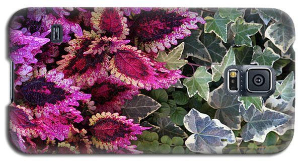 Galaxy S5 Case featuring the mixed media Coleus And Ivy- Photo By Linda Woods by Linda Woods