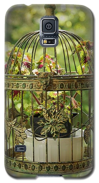 Coleus In Vintage Birdcage Galaxy S5 Case