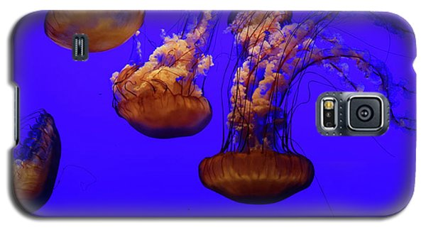 Collection Of Jellyfish Galaxy S5 Case