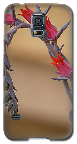 Color And Curve Galaxy S5 Case