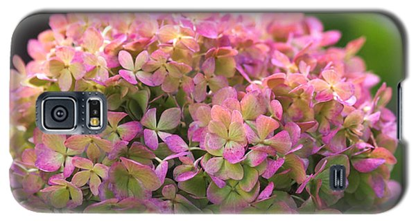 Color-changing Little Lime Hydrangea Galaxy S5 Case by Rona Black