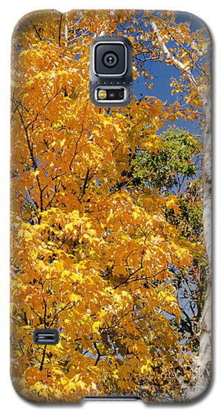Color In The Trees Galaxy S5 Case