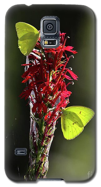 Galaxy S5 Case featuring the photograph Color On Citico by Douglas Stucky