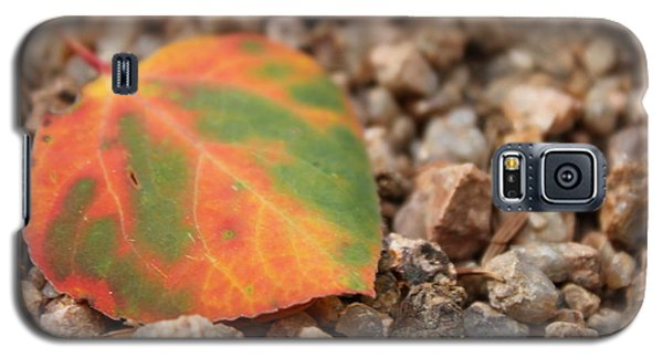 Galaxy S5 Case featuring the photograph Colorado Fall Colors by Christin Brodie