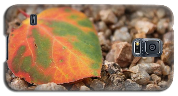 Colorado Fall Colors Galaxy S5 Case