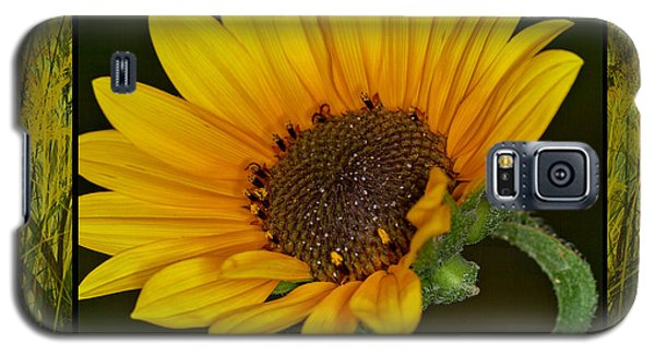 Colorado Sunflower Galaxy S5 Case