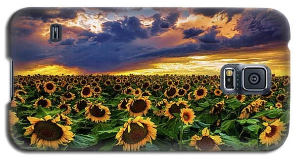 Colorado Sunflowers At Sunset Galaxy S5 Case