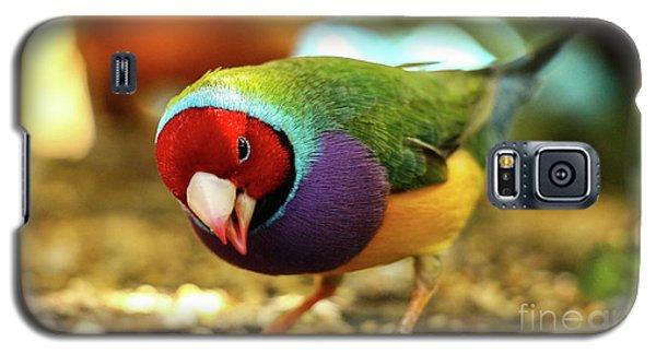 Colorful Bird Galaxy S5 Case