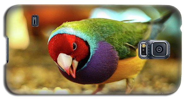 Colorful Bird Galaxy S5 Case