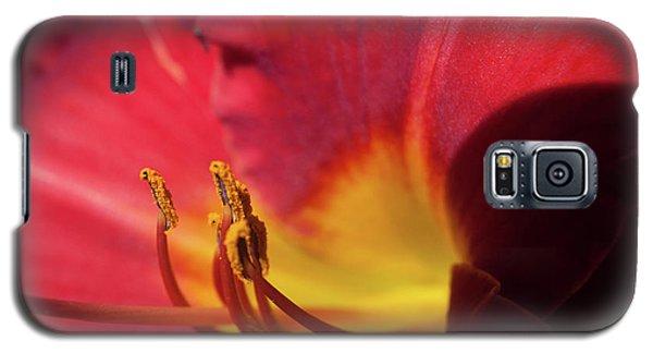 Colorful Cobras Galaxy S5 Case