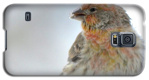 Colorful Finch Eating Breakfast Galaxy S5 Case