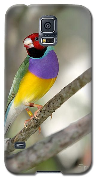 Colorful Gouldian Finch Galaxy S5 Case