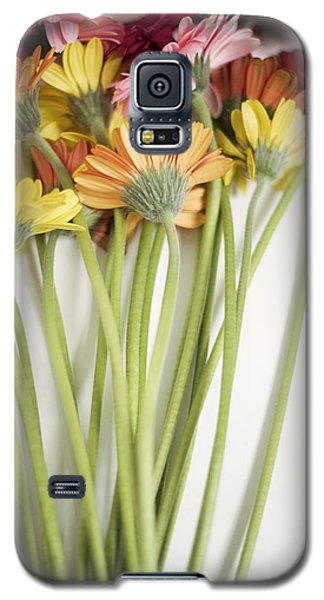 Colorful Long Stemmed Gerbera Daisies Galaxy S5 Case