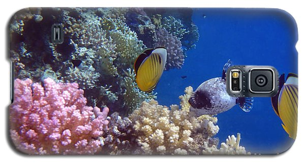 Colorful Red Sea Fish And Corals Galaxy S5 Case