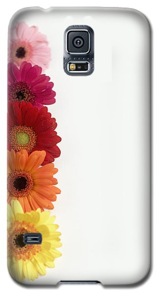 Colorful Row Of Gerbera Daisies Galaxy S5 Case
