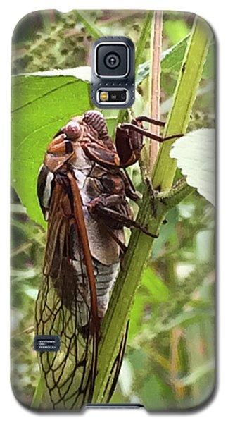 Colorful Summer Cicada Galaxy S5 Case