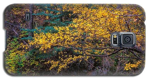 Colorful Trees Along The Creek Bank Galaxy S5 Case