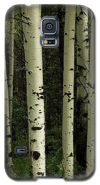Galaxy S5 Case featuring the photograph Colors And Texture Of A Forest Portrait by James BO Insogna