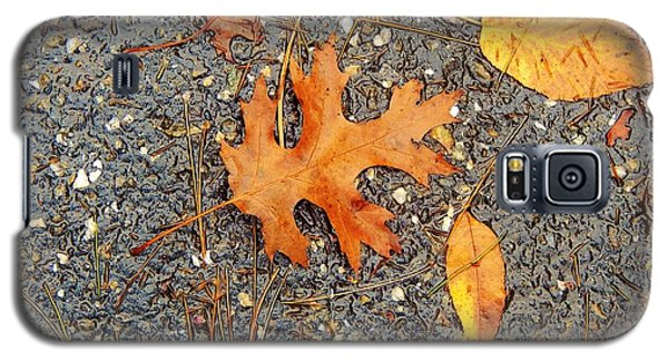 Colors Of Autumn In Montreal Galaxy S5 Case