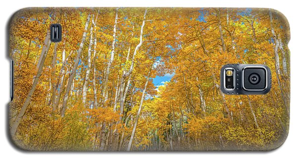 Galaxy S5 Case featuring the photograph Colors Of Fall by Darren White