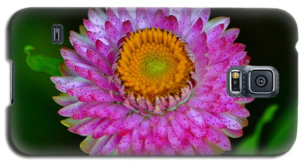 Galaxy S5 Case featuring the photograph Colors Of Nature - Grand Opening 001 by George Bostian