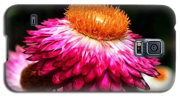 Galaxy S5 Case featuring the photograph Colors Of Nature - Grand Opening 002 by George Bostian