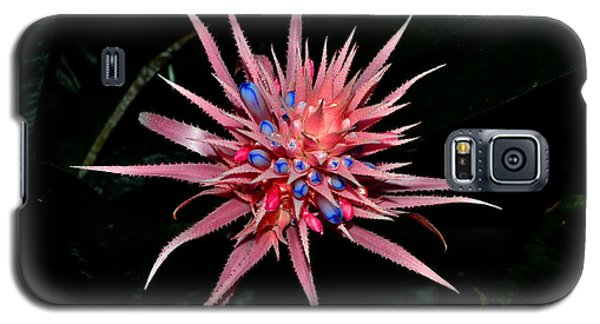 Galaxy S5 Case featuring the photograph Colors Of Nature - Pink And Blue Bromelia by George Bostian