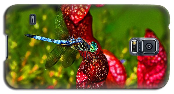 Galaxy S5 Case featuring the photograph Colors Of Nature - Profile Of A Dragonfly 003 by George Bostian