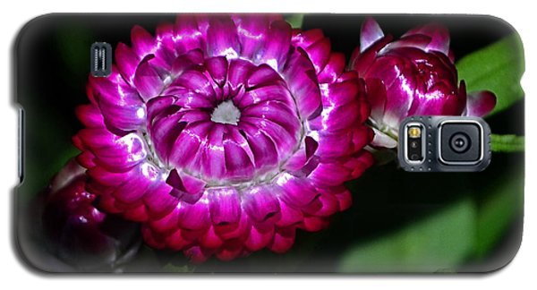 Galaxy S5 Case featuring the photograph Colors Of Nature - Strawflower 005 by George Bostian