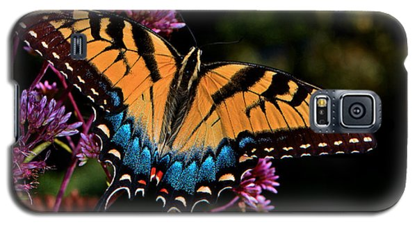 Colors Of Nature - Swallowtail Butterfly 004 Galaxy S5 Case