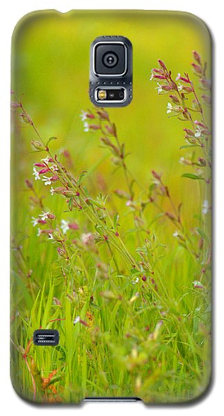 Colors Of Spring Galaxy S5 Case by Rachel Mirror