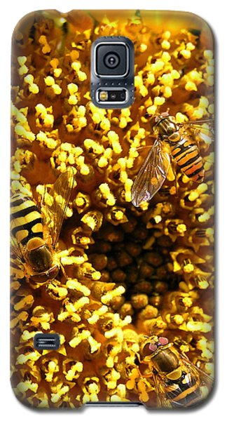 Colour Of Honey Galaxy S5 Case