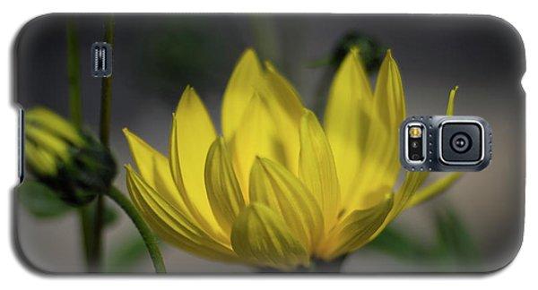 Colour Of Sun Galaxy S5 Case