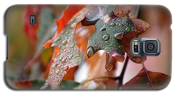 Colours Of Fall I Galaxy S5 Case by Robert Meanor