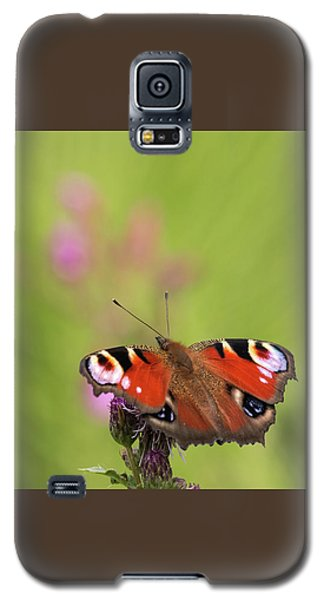 Colours Of Summer Galaxy S5 Case