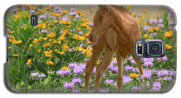Colt In The Flowers Galaxy S5 Case by Myrna Bradshaw